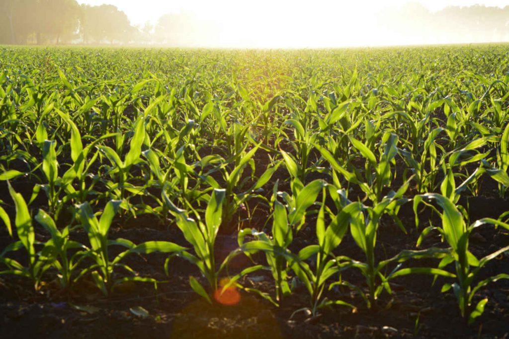 Feld für Biogas